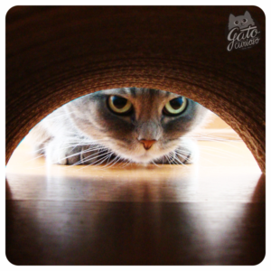 Rascadores para Gatos - Gato curioso