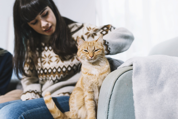 razones ronroneo de gatos