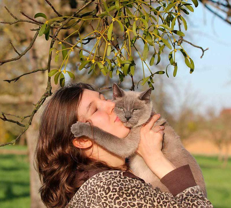 Los Gatos como Mascotas y los 4 beneficios de tenerlos en casa