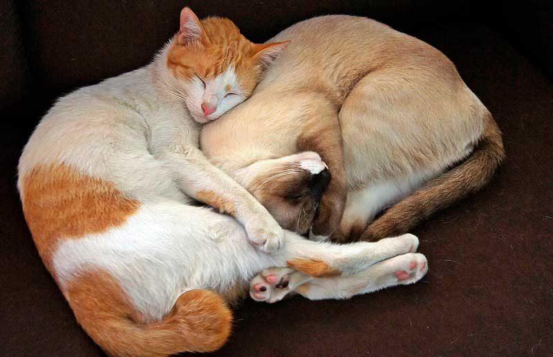 Los 5 Pasos para socializar dos gatos