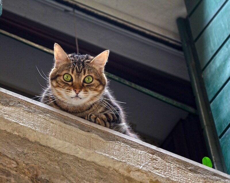 El ABC sobre el Síndrome del Gato Paracaidista