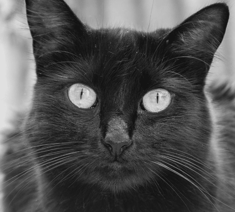 ¿Cómo puedo saber el sexo de un gato?