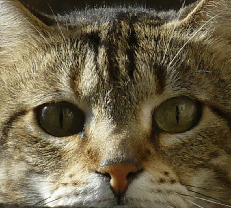 ¿A los gatos se les puede dar leche?